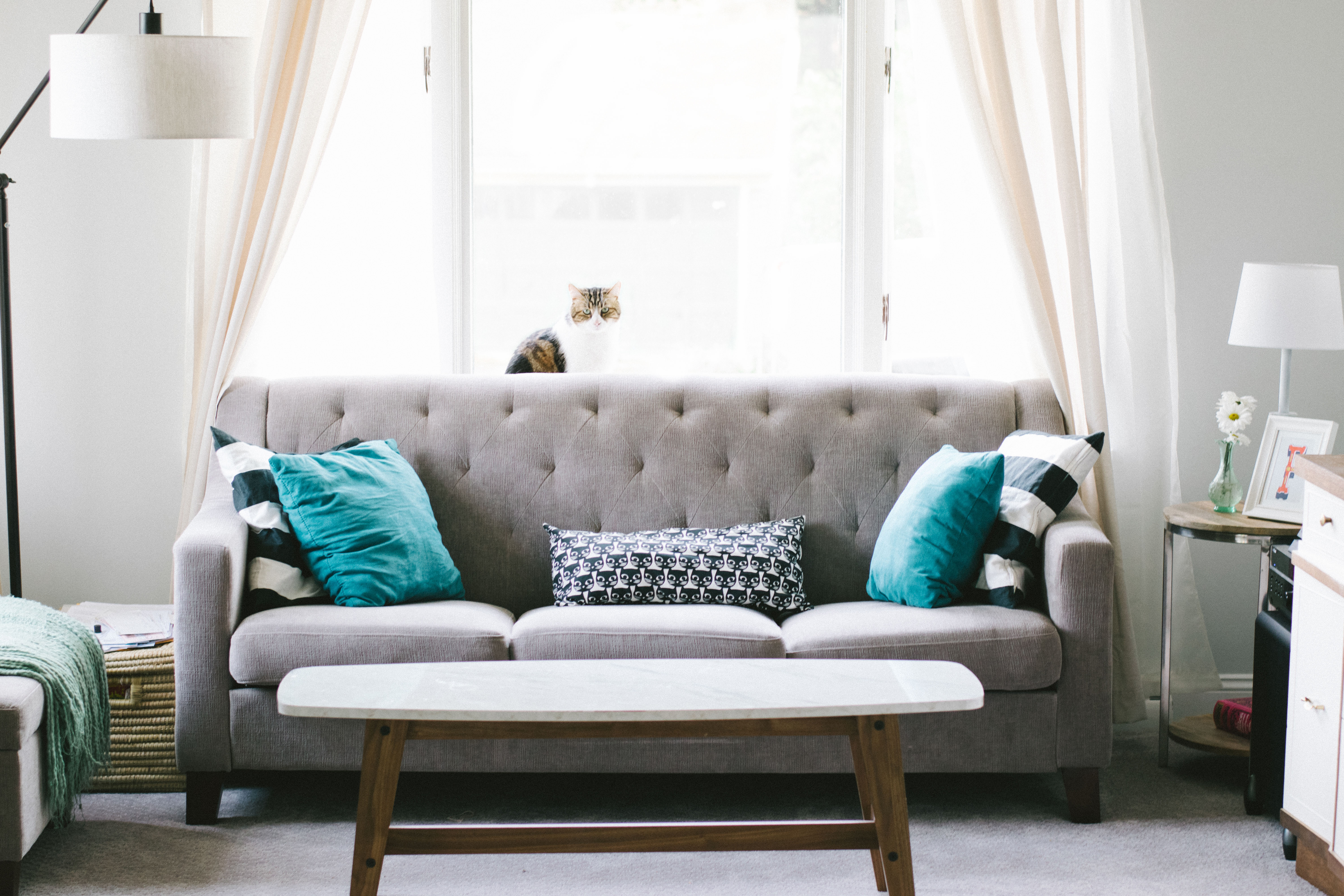 Interior photo, grey couch with cat