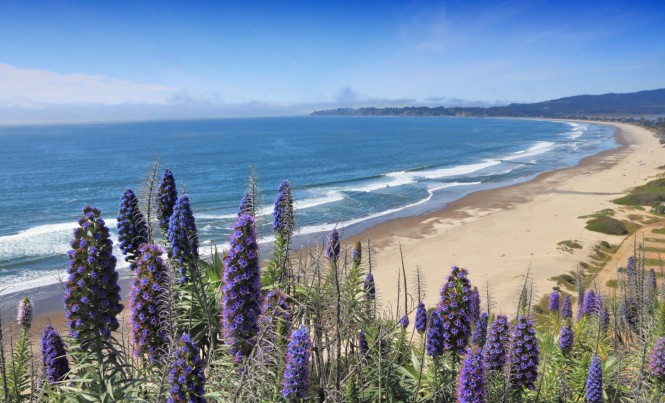 bigs-Stinson-Beach-with-Flowers-Pride-Of-Madeira-E1-Large